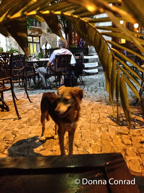 dog - flash fiction - plaza de san francisco - havana- cafe del oriente - donna conrad